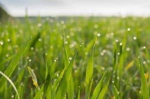 meadow 2224775 640