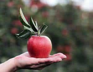 apple 2788613 640 300x231